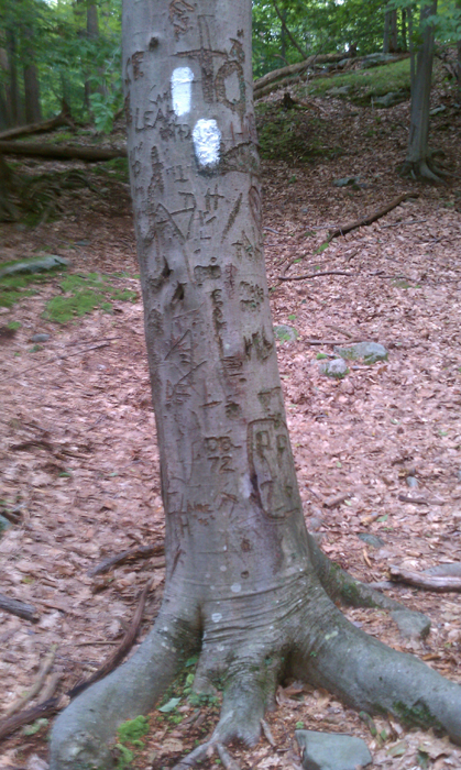 appalachian trail bear harriman parks 45