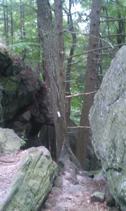 appalachian trail bear harriman parks 51