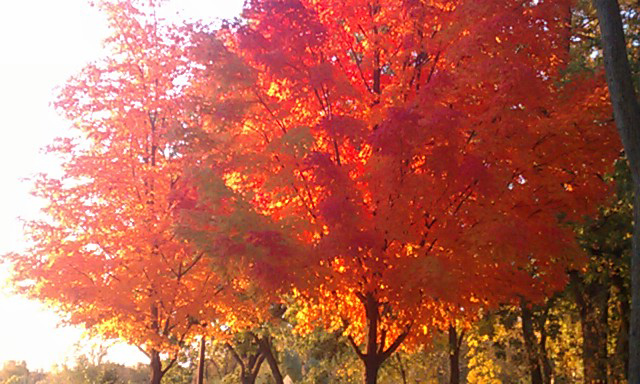 minneapolis fall trees 2