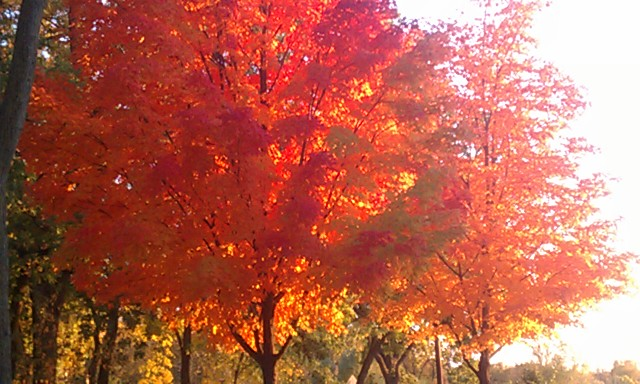 minneapolis fall trees