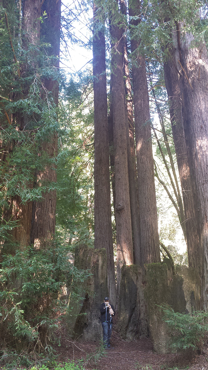 unpreventable redwoods photo, but at least i am holding an animal